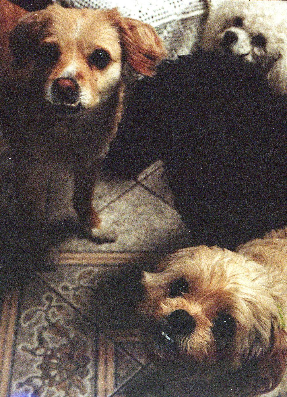 Marija Vidovic, Dogs - 2.jpg