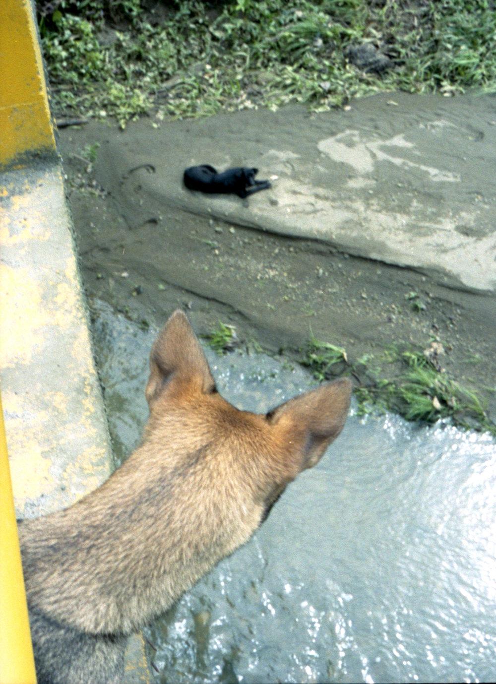 Marija Vidovic, Dogs - 16.jpg