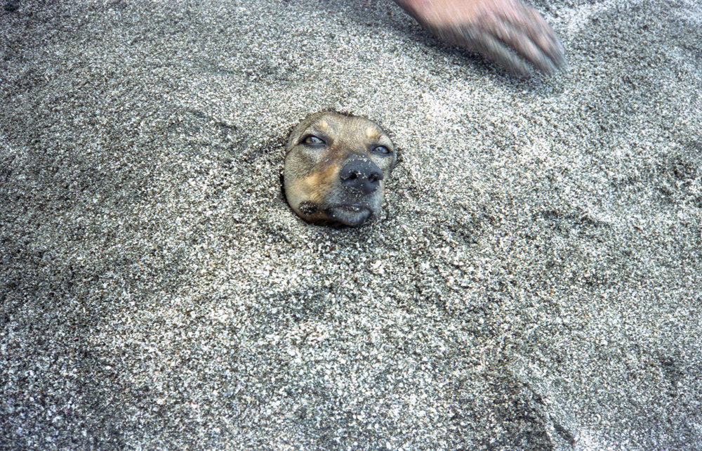 Marija Vidovic, Dogs - 18.jpg