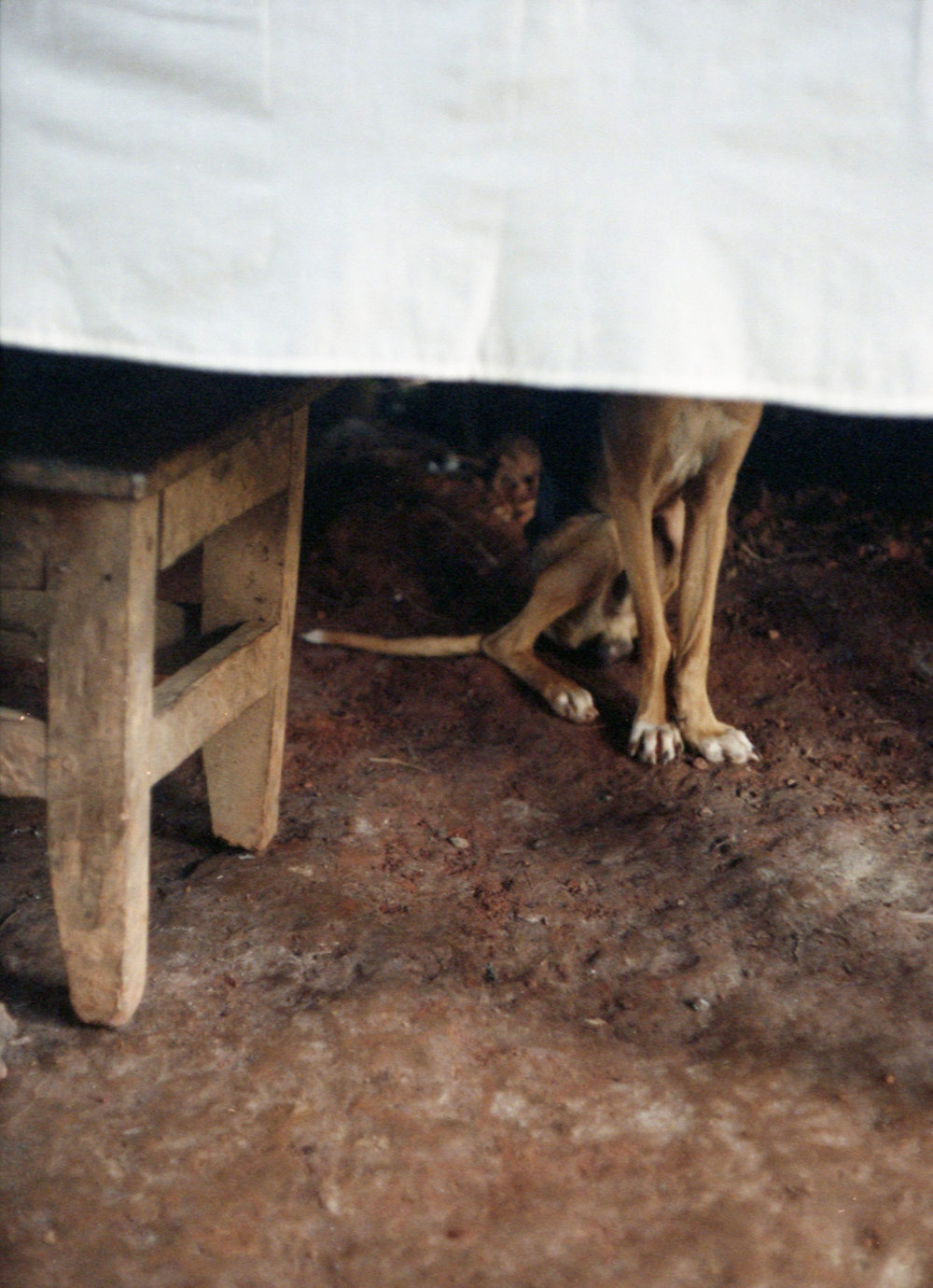 Marija Vidovic, Dogs - 22.jpg
