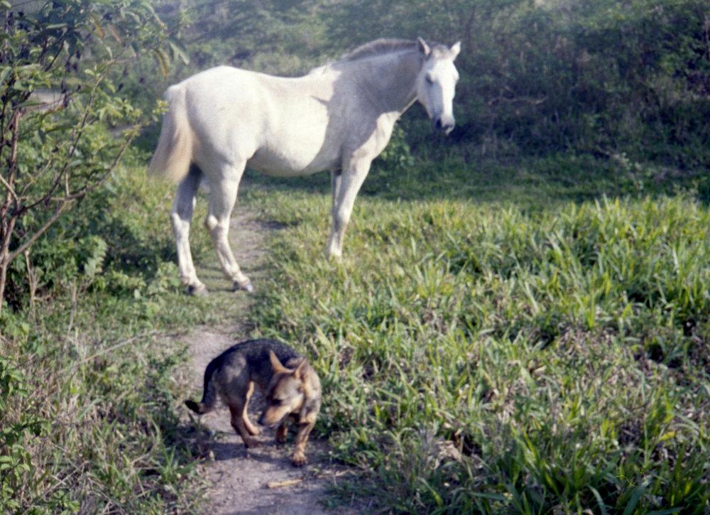 Marija Vidovic, Dogs - 21.jpg