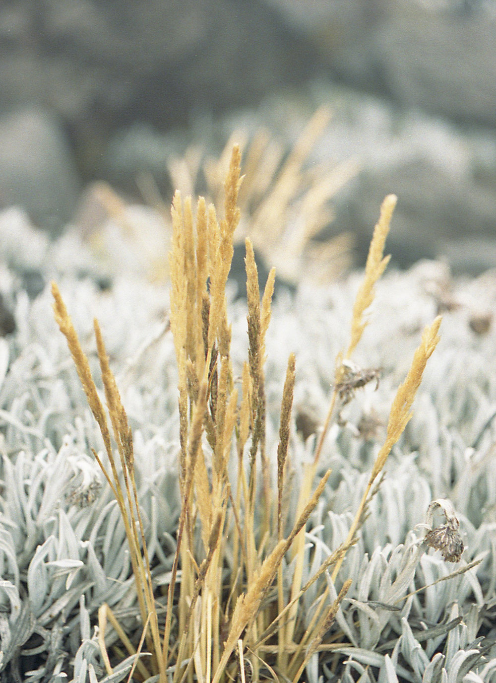 Marija Vidovic, Plants 6.jpg