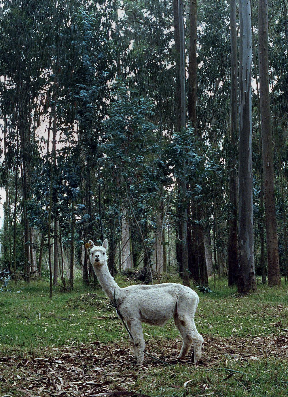 ekvador185.jpg