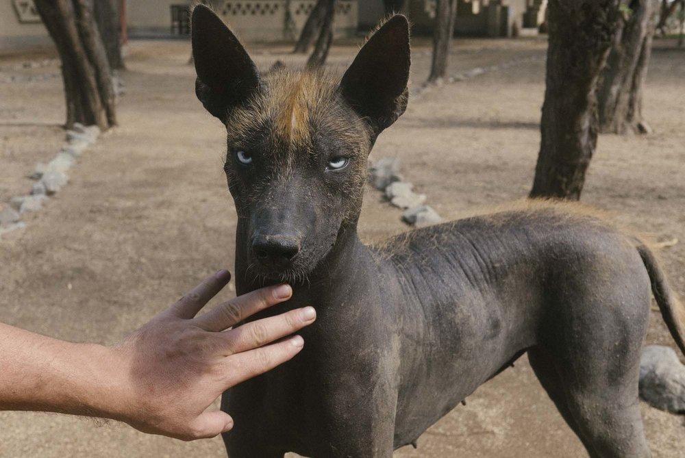 Marija Vidovic, Dogs 7.jpg
