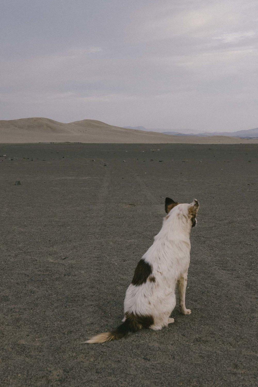 Marija Vidovic, Dogs 9.jpg
