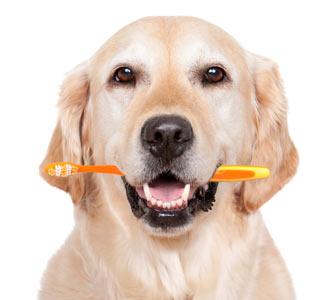 dog_teeth_dog_home_dental_health.jpg