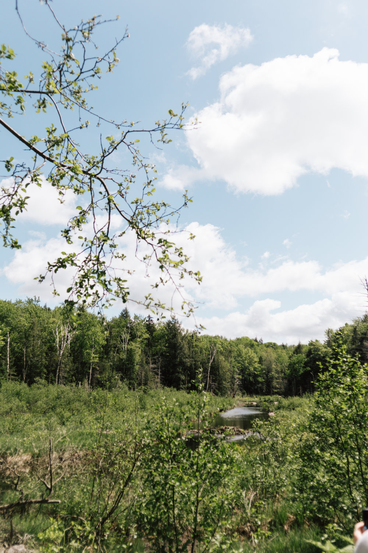 In the woods- toyosi oyelola-5.jpg