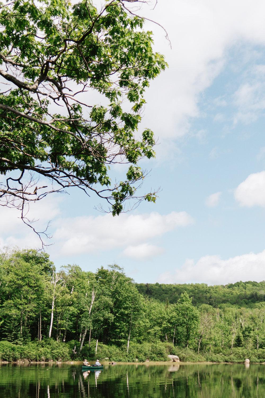 In the woods- toyosi oyelola-10.jpg