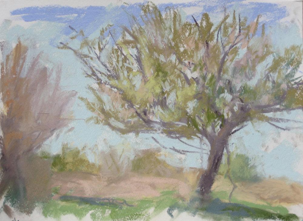 Apple Tree May 3