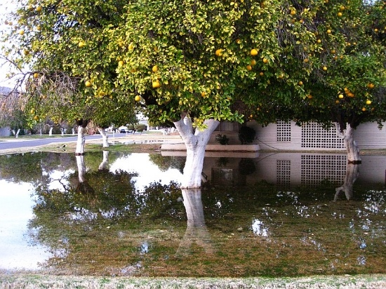 According to experts, flood irrigation is still the best option for mature trees and established turf, which provides cooler temperatures in the summer.
