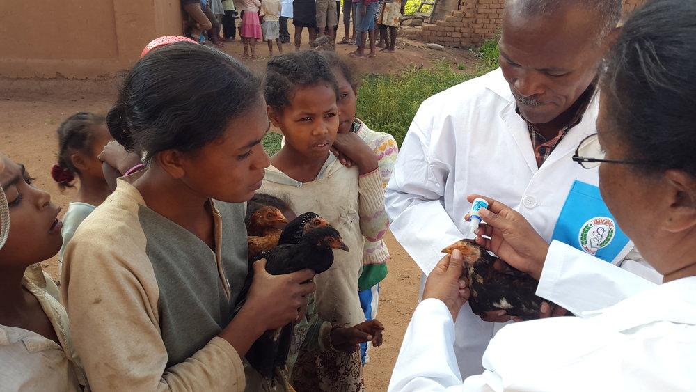 Farmers watching vaccinators.jpg