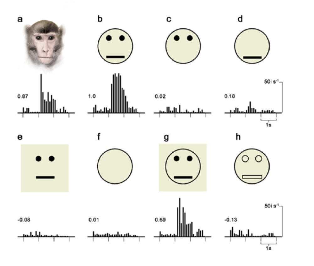 Figure 4. Cell activation in response to faces.  Source:Kandel, Eric R. The Age of Insight: The Quest to Understand the Unconscious in Art, Mind, and Brain: From Vienna 1900 to the Present. New York: Random House, 2012. Print.