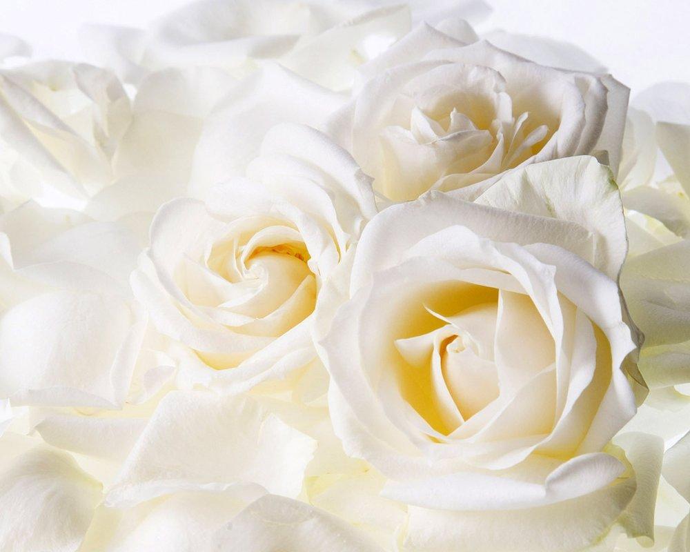 white roses...jpg