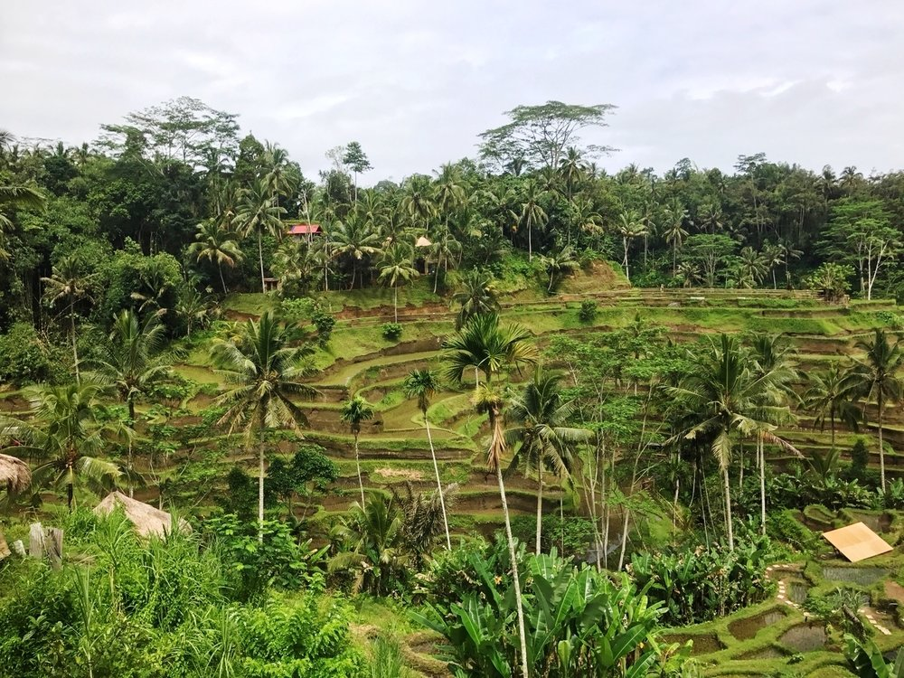 Tegallalang Rice Terrace Ubud Bali