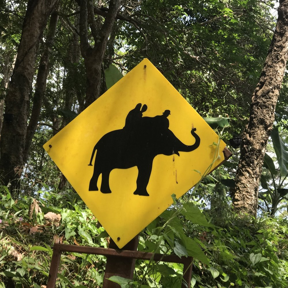 Elephants Ahead.JPG