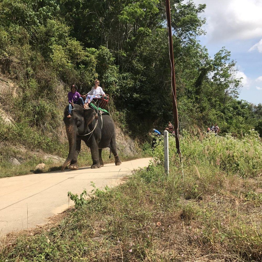 Elephant Trekking Phuket.JPG