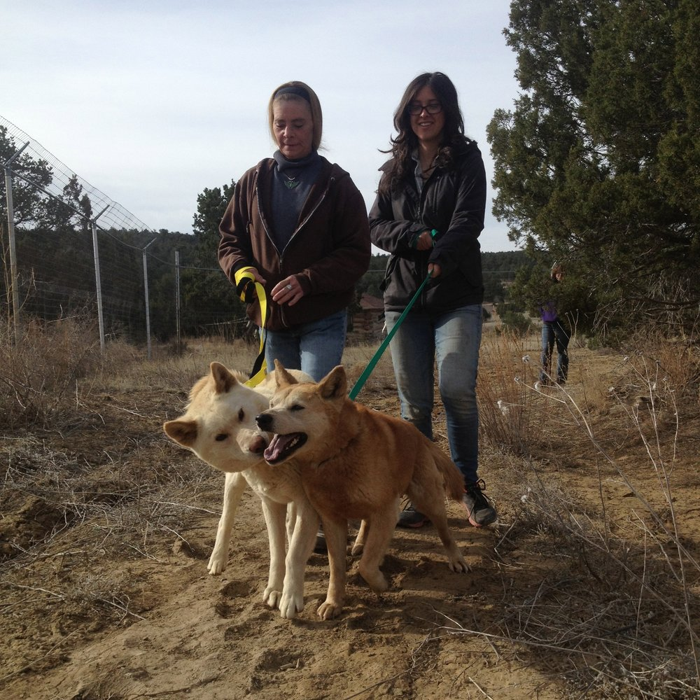 L to R: Tina and Courtney walking Australian Dingoes Glacier and Kooyong.
