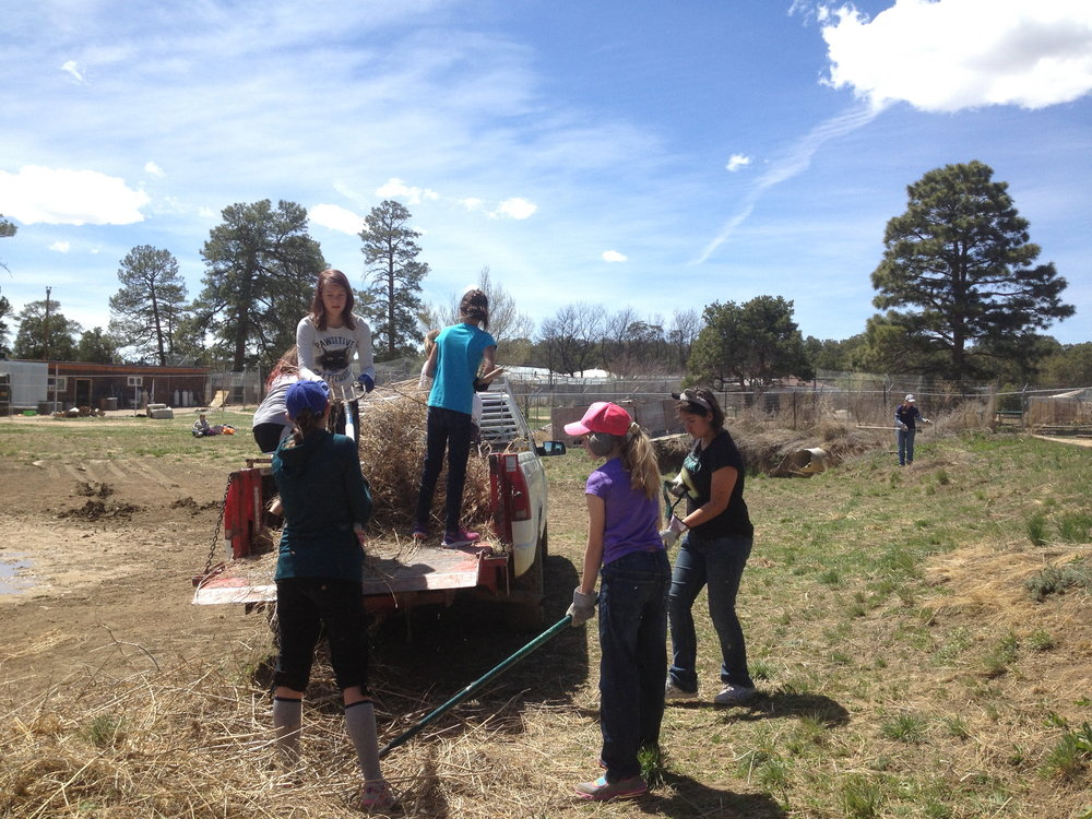 Girl Scouts clearing brush.jpg