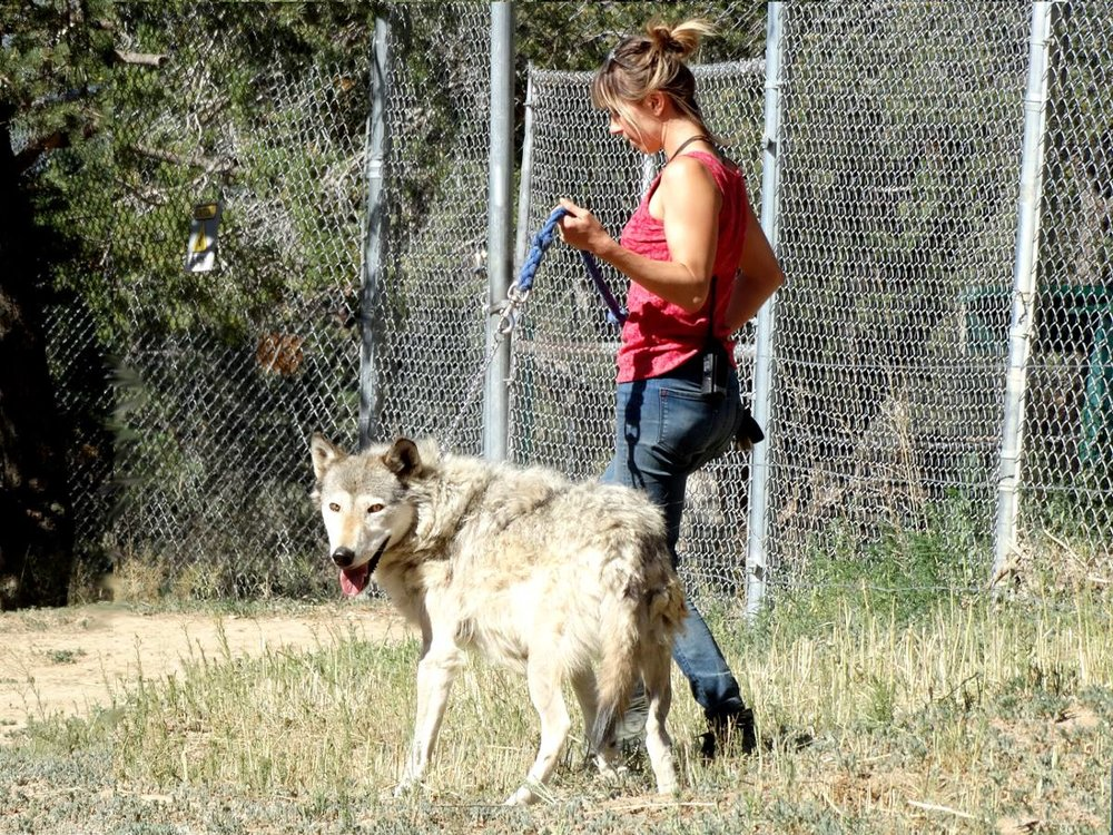 Me Walking Dakota by Paul.jpg