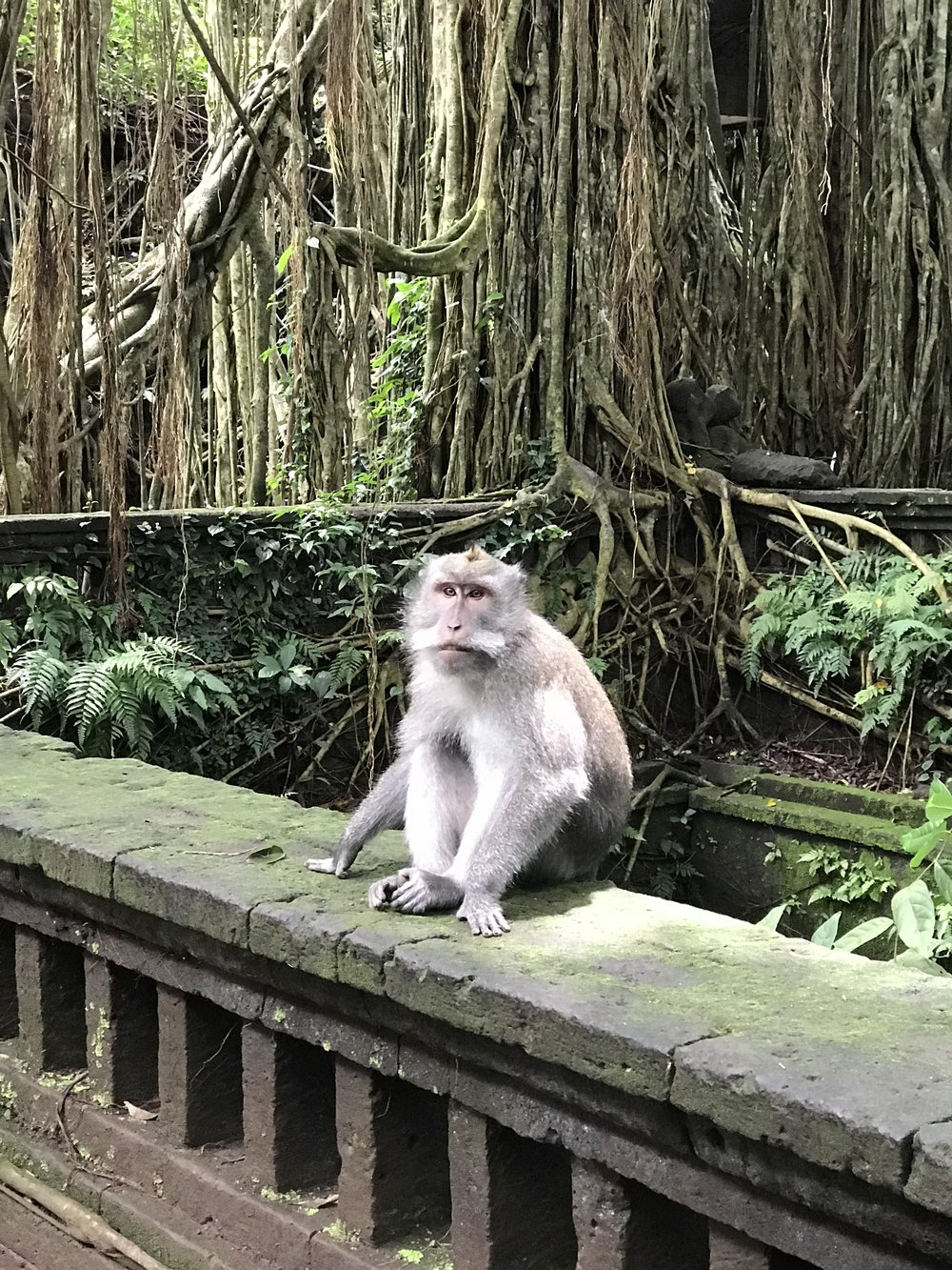 Ubud's Sacred Monkey Forest Sanctuary