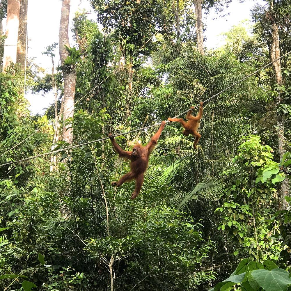 Semenggoh Wildlife Centre Borneo