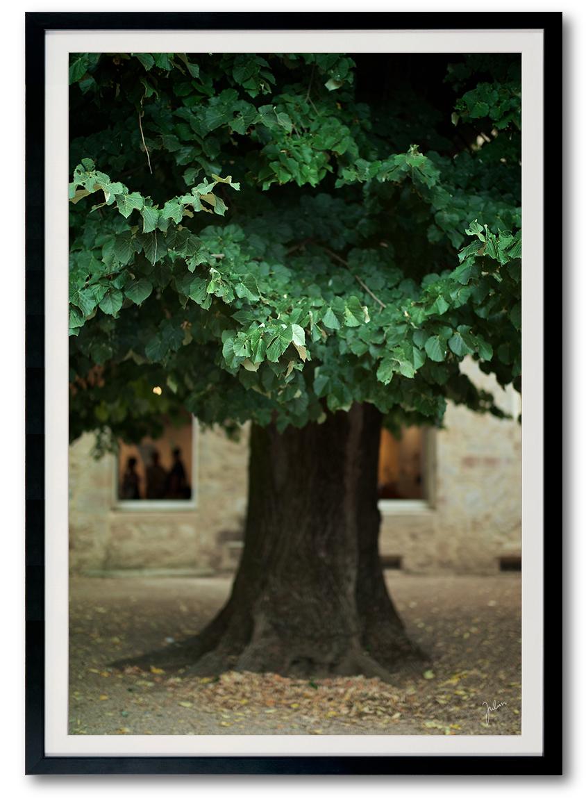 JuliusYls_tree.jpg