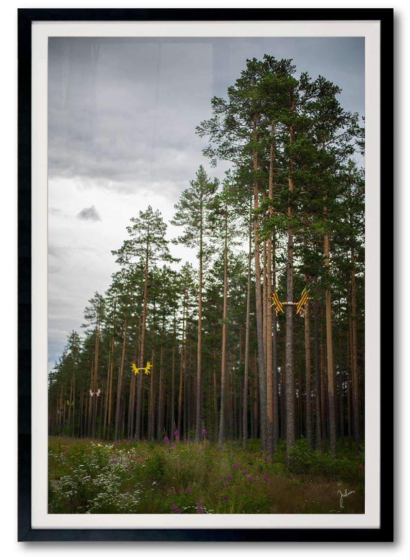 JuliusYls_pine.jpg