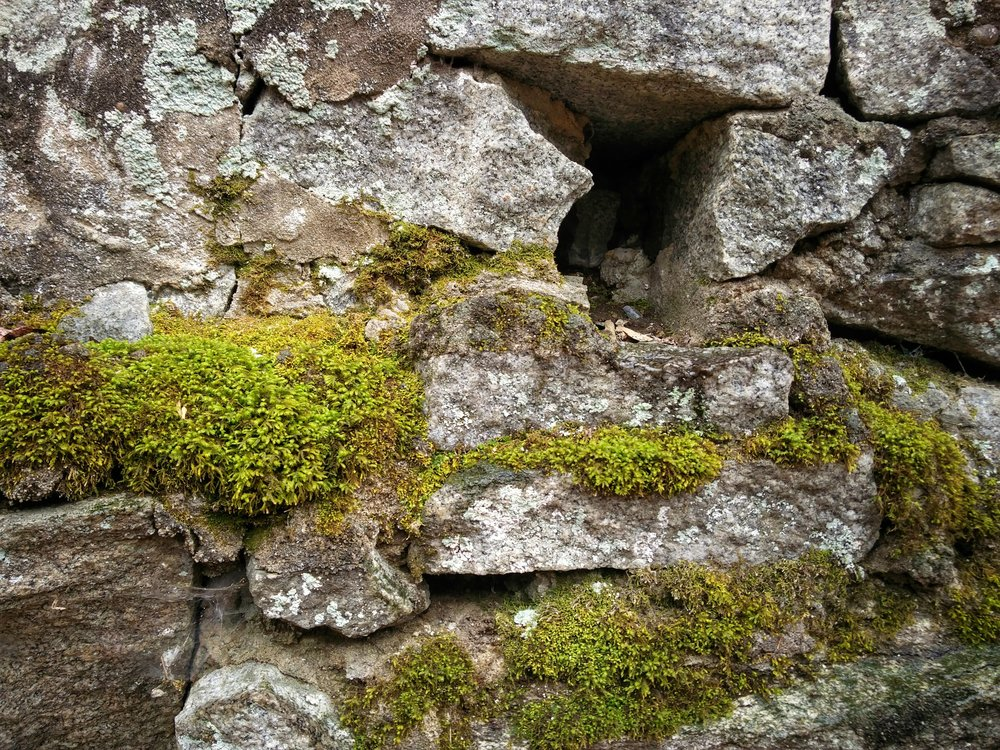 Moss growing on the wall. Howard County, MD.