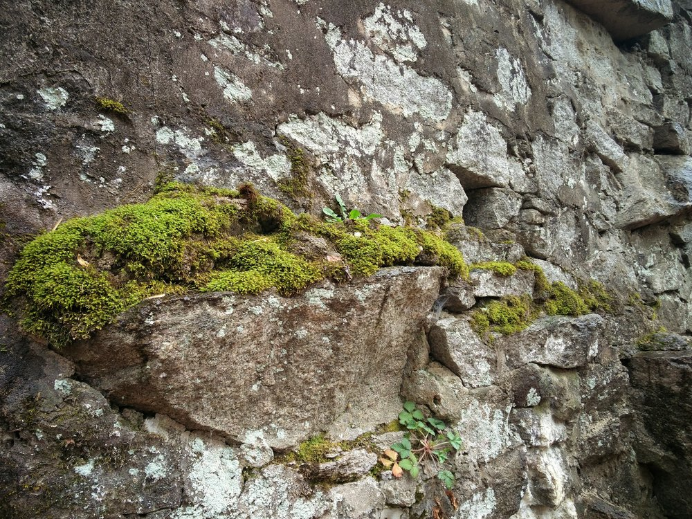 Or is it lichen growing on the wall? Howard County, MD.