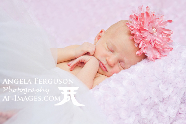 Newborn Girl Portrait Photo, Annapolis, MD. Copyright Angela Ferguson Photography