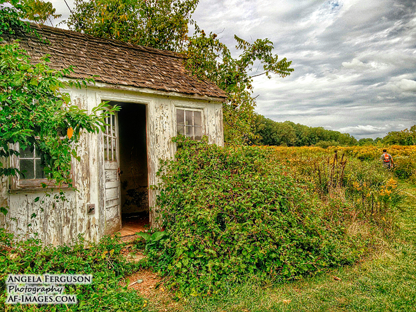 Cottage on the hiking trail, Baltimore, MD. (Copyright Angela Ferguson Photography)