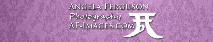 Angela Ferguson Photography