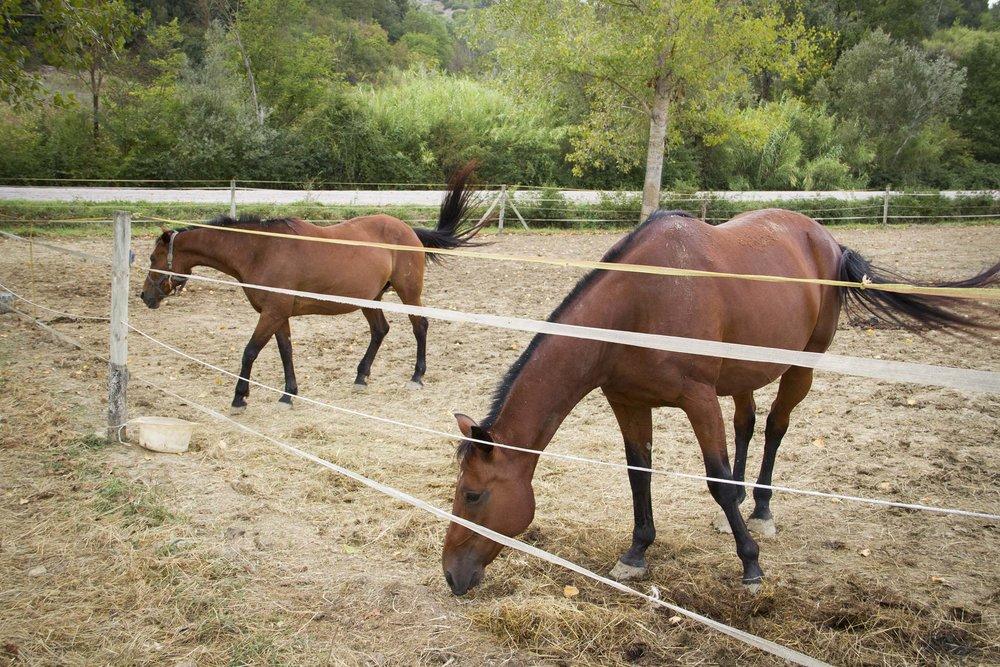Maramaldo horses