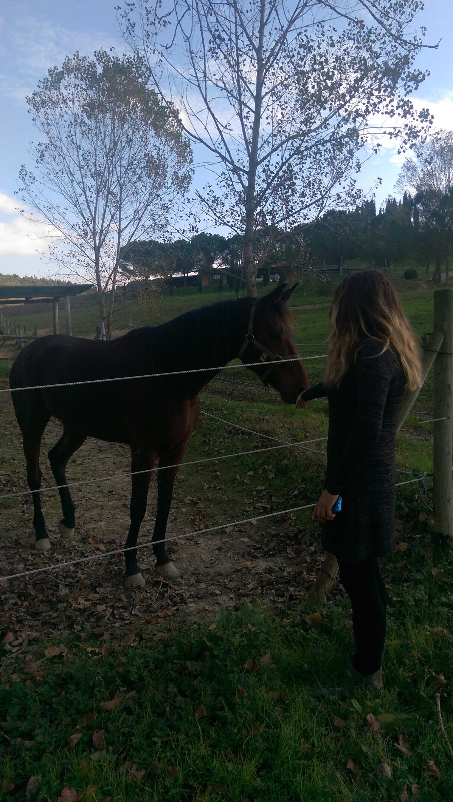 Agriturismo Maramaldo horse farm 2