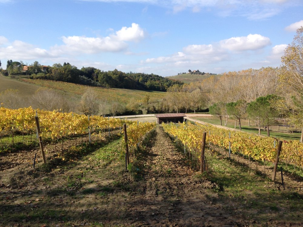 Maramaldo vineyard