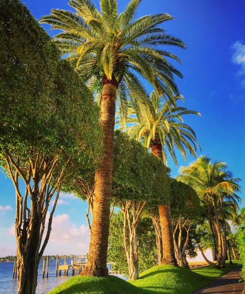 palm beach island4