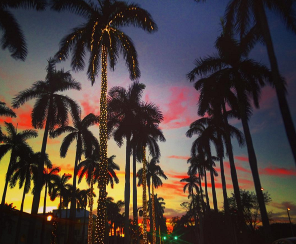 palms sunset