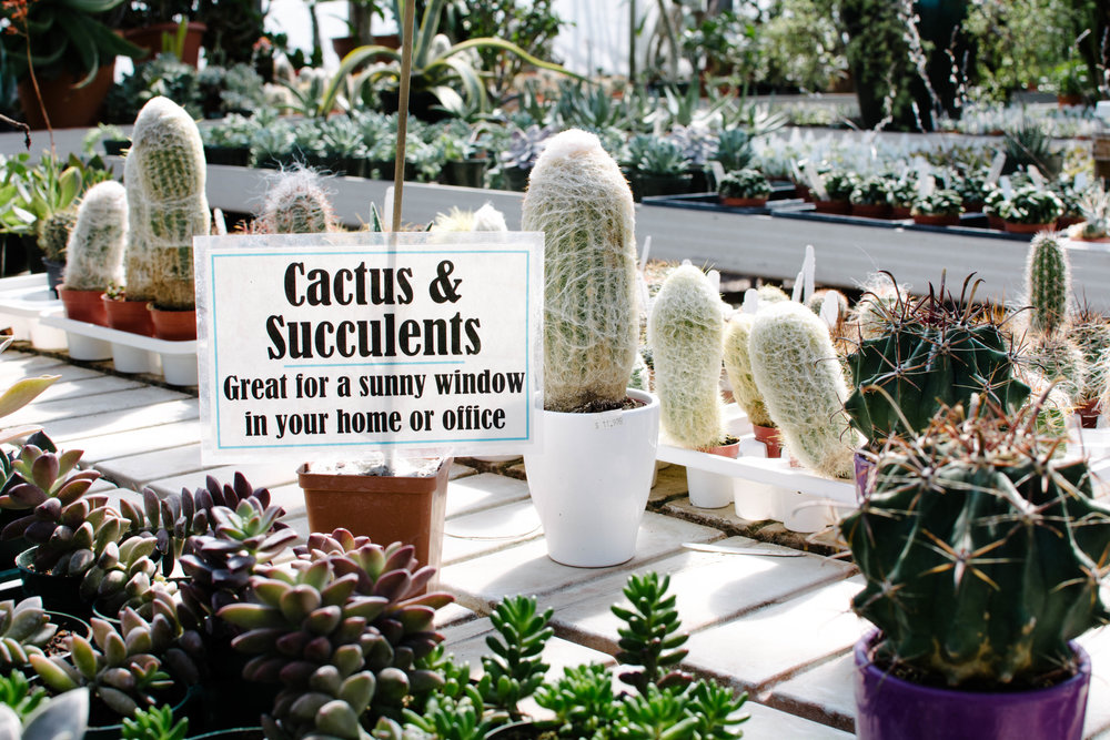 How To Care For Your Succulents Ace Camp