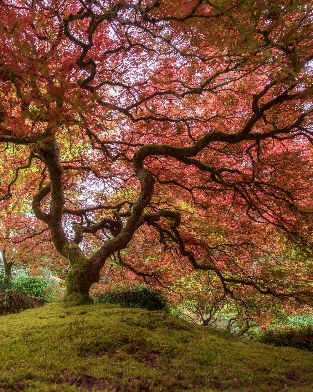 treeframe.jpg