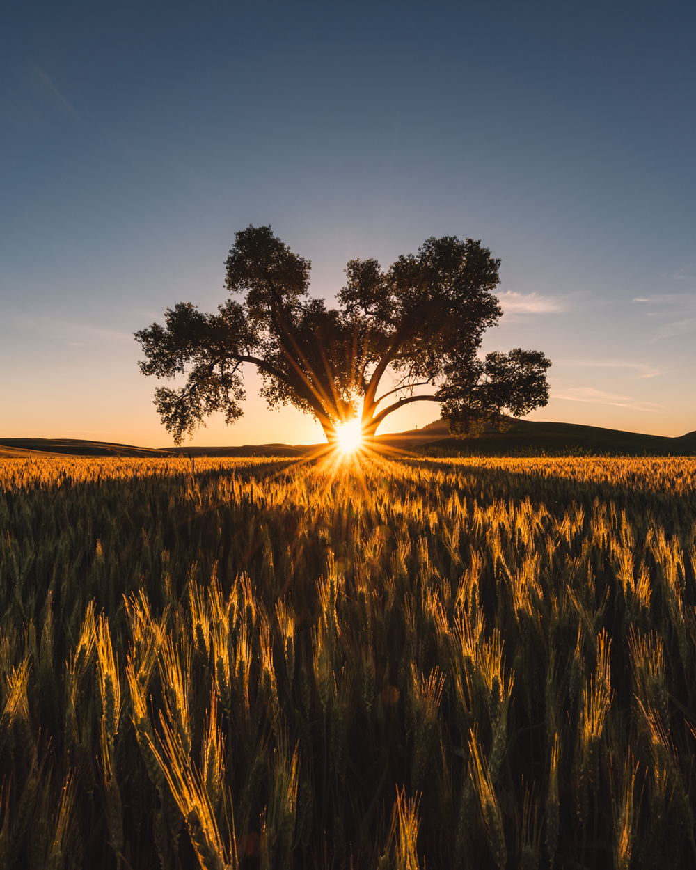 Palouse Workshop - May 25th-28th 2018 $1,599.003 Nights and 4 DaysExplore the rolling hills of the PalouseLodging in Pullman, Washington and transportation from Portland included!3 Sunsets 3 Sunrises lots of exploring in between!We will also explore some waterfalls of the Columbia River Gorge before we depart for the Palouse!Take your photography to the next level with seasoned photographers who know how to teach in real time scene situations.Limited to 8 participants this will sell out fast!