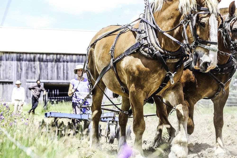 horses_disc.jpg