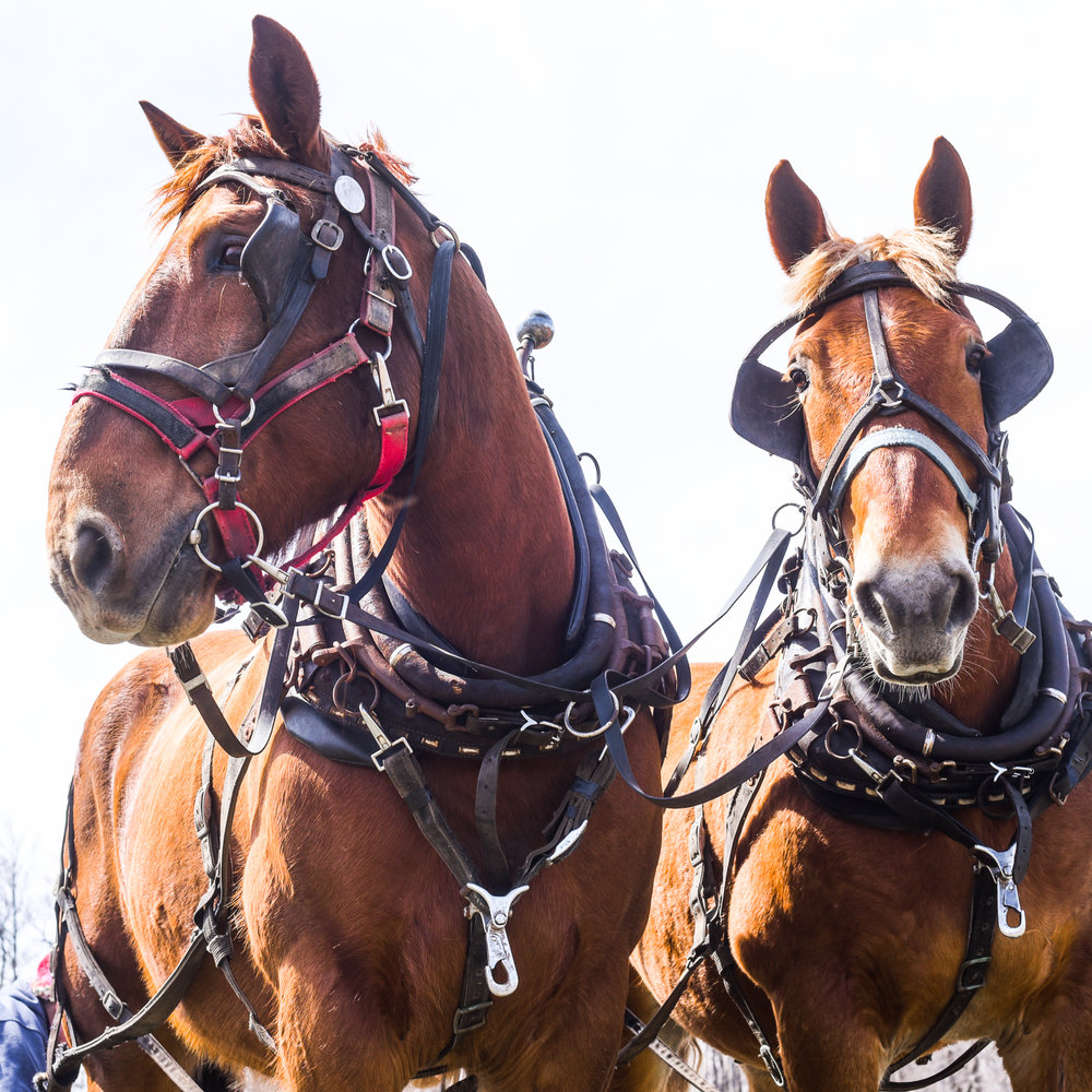 Donate-Horses.jpg