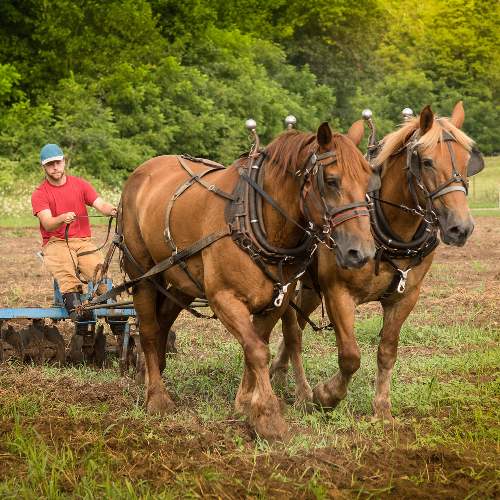We keep several traditional farming and practical skills alive in the United States as many communities around the world still rely on pre-industrial tools and knowledge to survive.