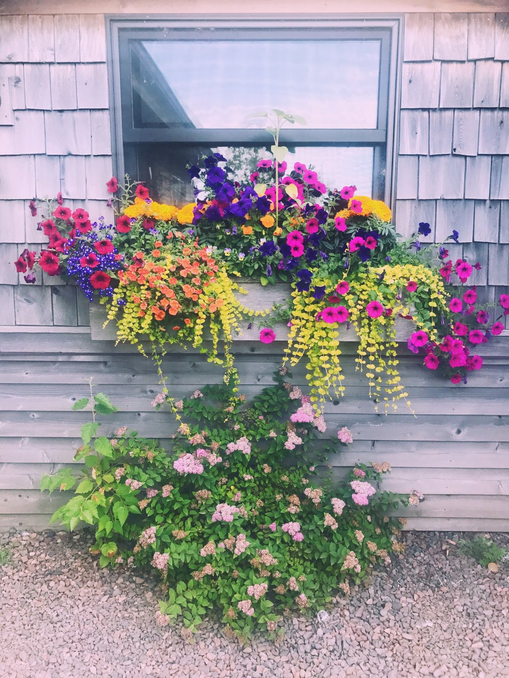 the flower boxes in grand marais are something else. so beautiful.