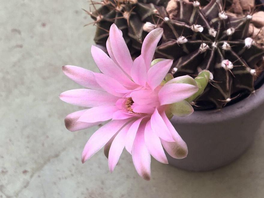 02 Cactus.jpg