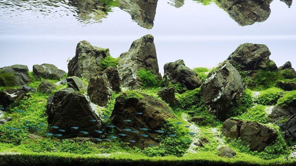 Een aquarium in de 'Iwagumi style'. De term Iwagumi komt van het Japanse 'rotsformatie'. Deze stijl is ontwikkeld door de beroemde aquariaan Takashi Amano, geïnspireerd door Japanse cultuur, spiritualiteit en liefde voor schoonheid en eenvoud.