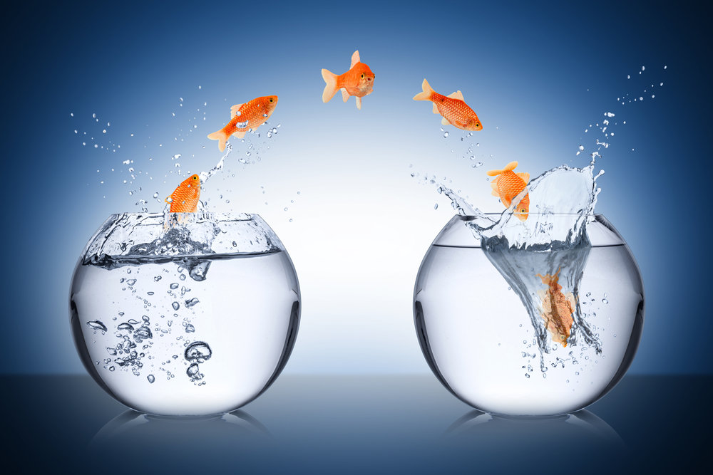 goldfish jumping to new bowl.jpg