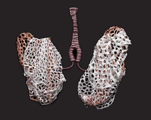 12 KBergmans 2011 Lungs