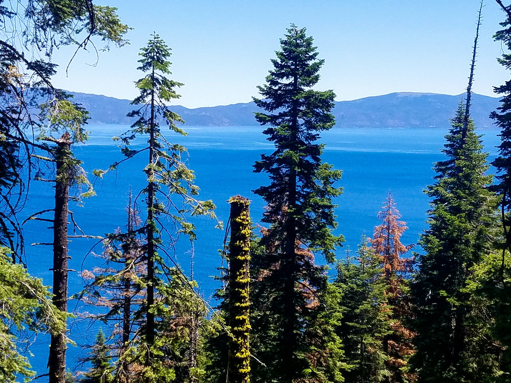 View of Lake Tahoe along the trail