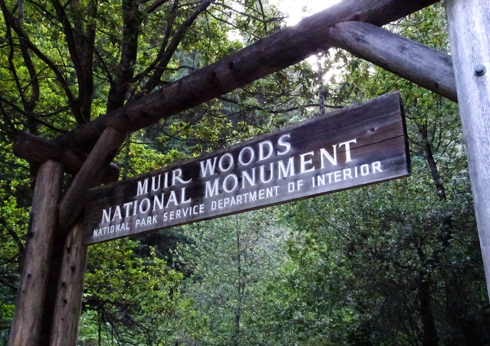 MuirWoodsNationalMonument
